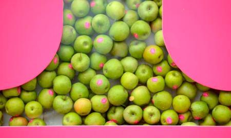 almaosztó