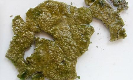 algák