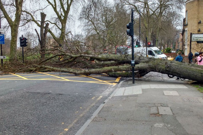 Kidőlt fa Londonban Forrás: standard.co.uk