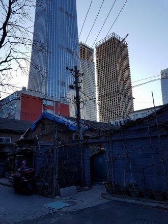 Öreg viskók a toronyházak tövében