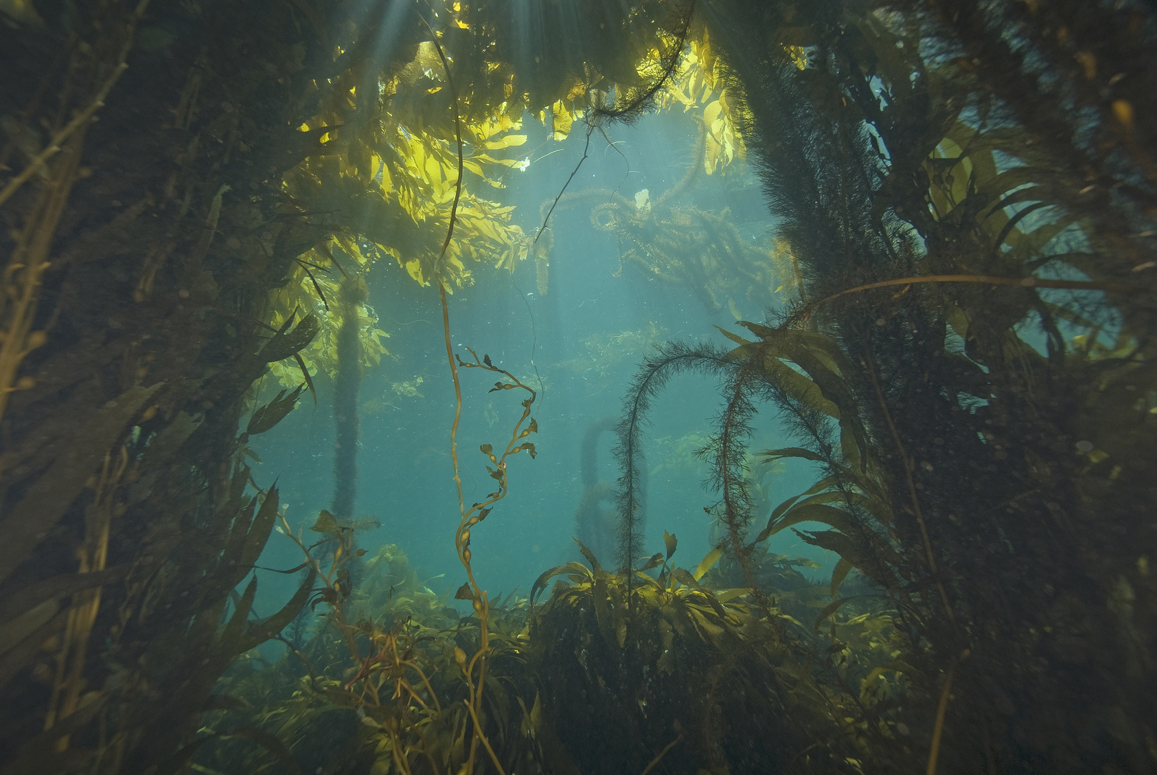 Ingredient Spotlight Kelp And Other Amazing Seaweeds