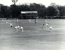 photo of cricket in Hagley Park