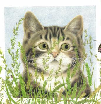 kittycat lullaby c