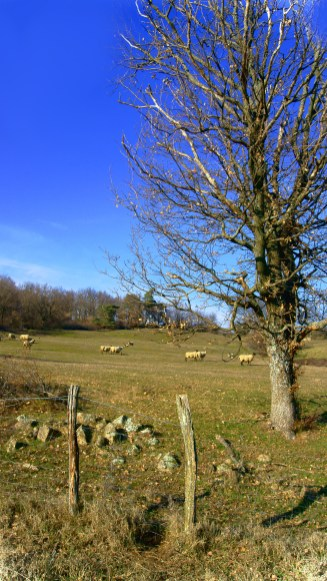 Scéne Rurale