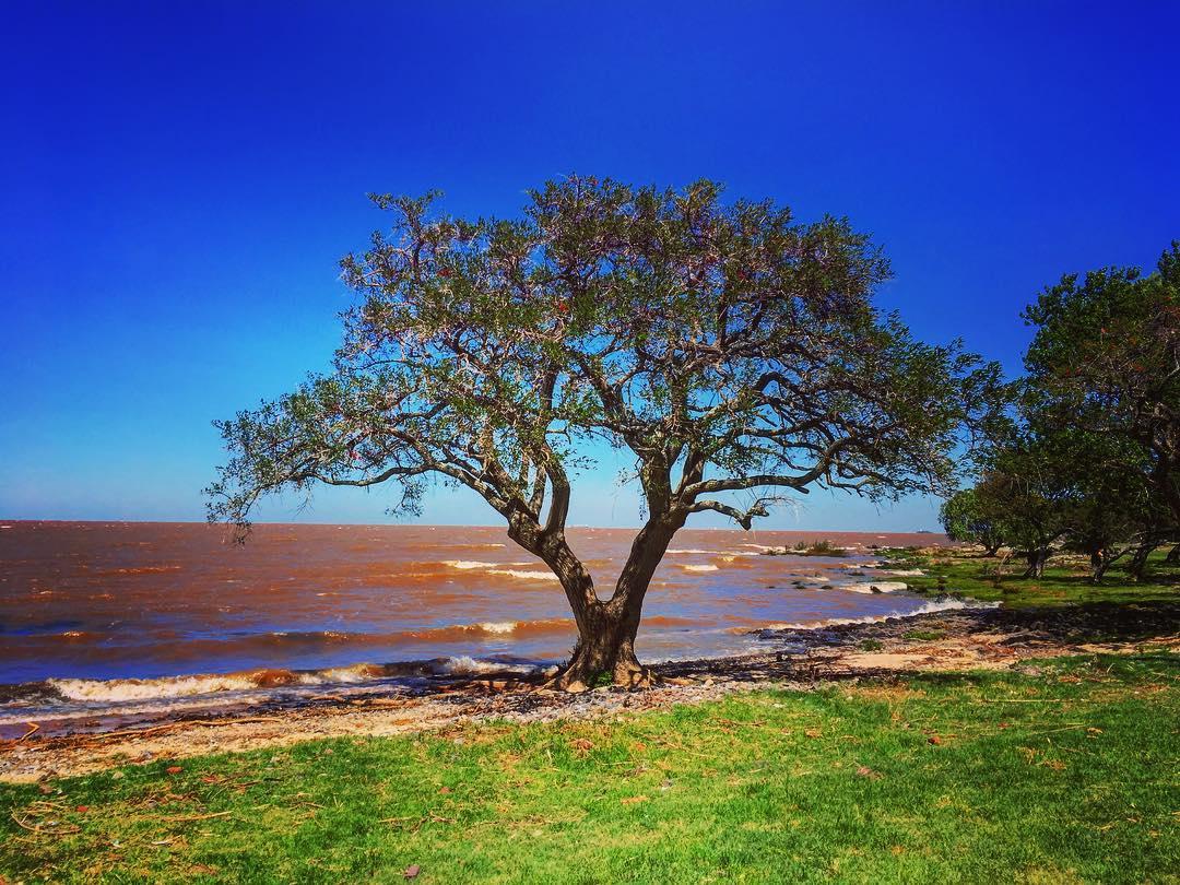 Colonia del Sacramento, Uruguay. Les eaux boueuses du Rio de la Plata, estuaire des Rios Paraná et Uruguay qui se retrouvent peu avant Buenos Aires et Colonia del Sacramento.
