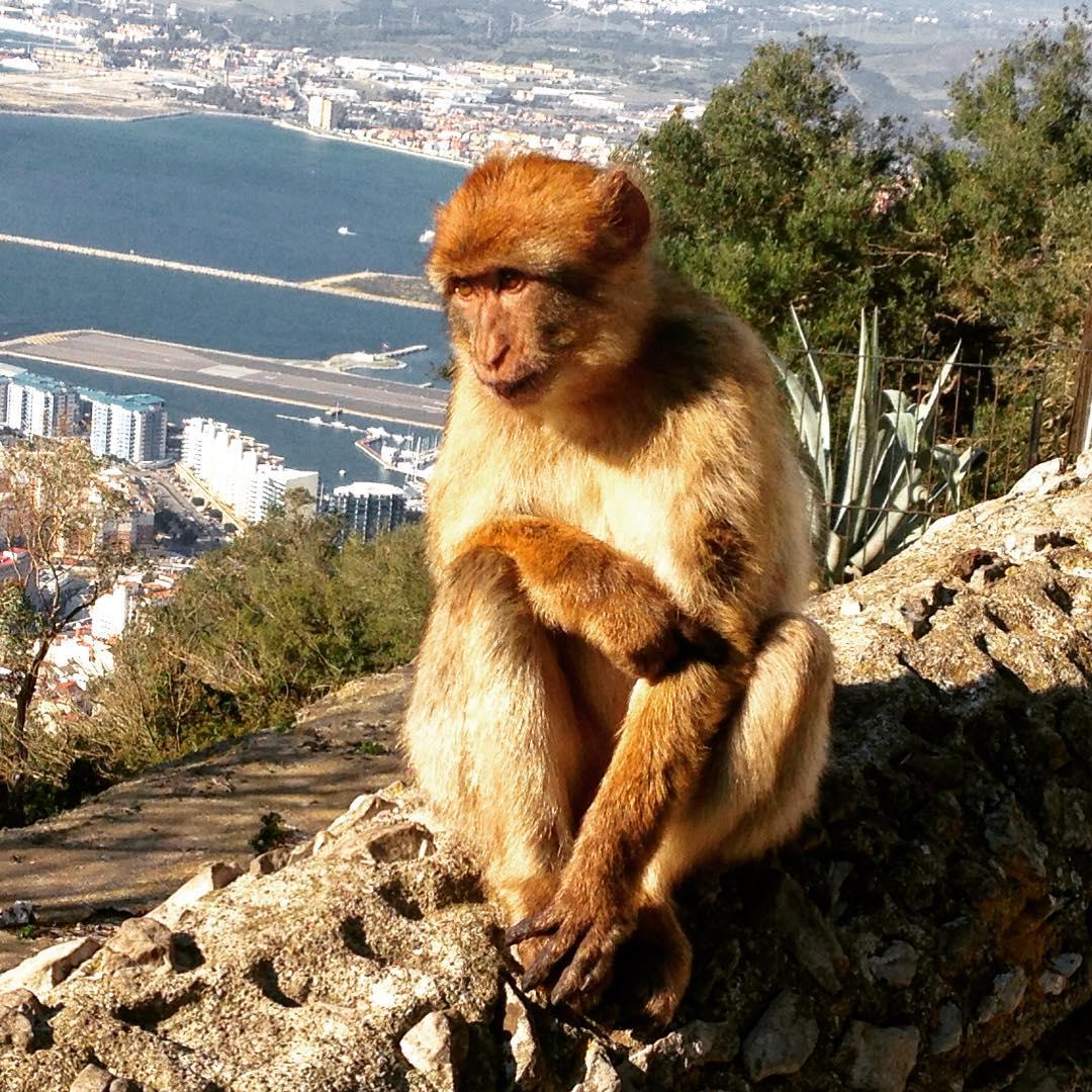 Gibraltar, Territoire d'outre-mer contesté du Royaume-Uni. Alors, Josette m'a bien donné la liste des courses, mais je l'ai fait tomber...