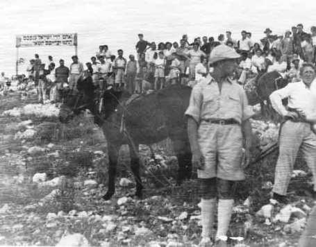 kibbutz_donkey