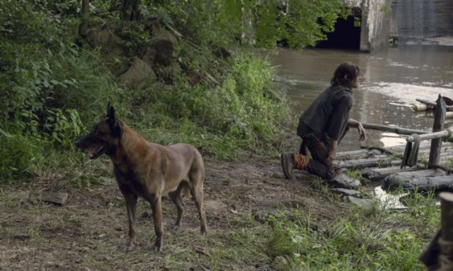 The Walking Dead: Daryl Dixon e il suo cane