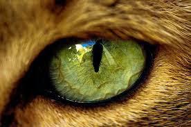 Ojos de gato. Carmen Cecilia Morales González