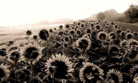 Cuatro preguntas a Ester Mönke sobre «Los girasoles negros»