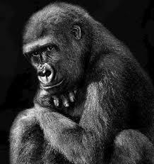 El planeta de los simios de la fotógrafa Isabel Muñoz