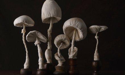 Patricia Heal, la naturaleza y la sofisticación en una misma foto