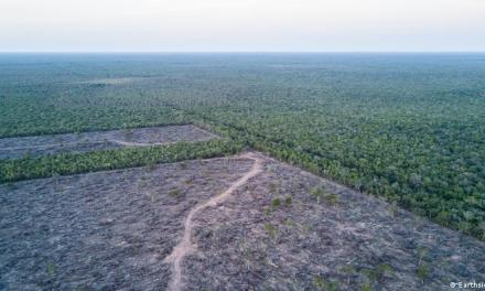 El proyecto de crear un «museo verde» en el Gran Chaco paraguayo frente a la deforestación