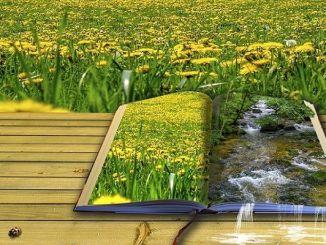 Los Beneficios de Leer Poesía
