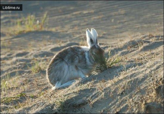 Тип зайца. Интересные факты о зайцах: разновидности и образ жизни ушастых прыгунов