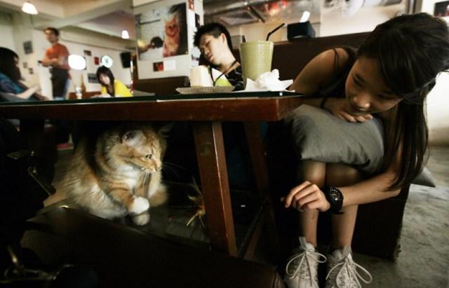 Ah Meow, Honkong