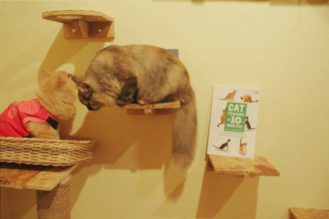 Miaw Shake Cat Cafe