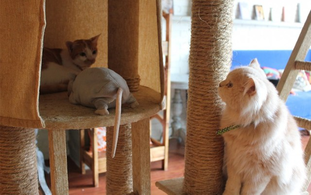 The cat cabin (sumber foto)