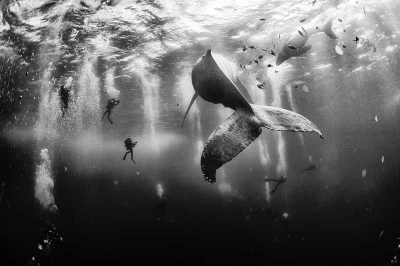 1. Diving with a humpback whale and her new born calf while they cru