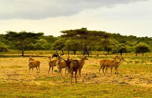 Taman Nasional Baluran (sumber)