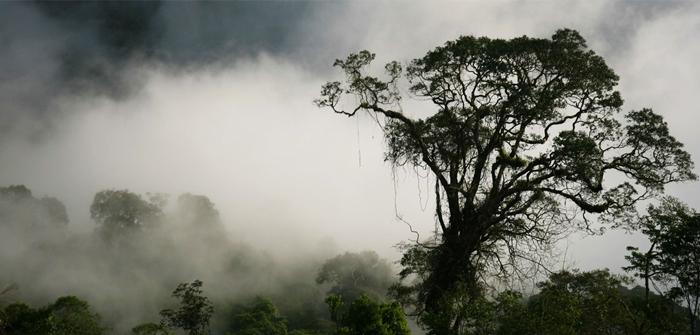 North Kalimantan (Kalimantan Utara) - Kayan Mentarang