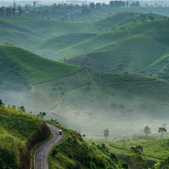 Perkebunan Teh Cukul, Pangalengan, Jawa