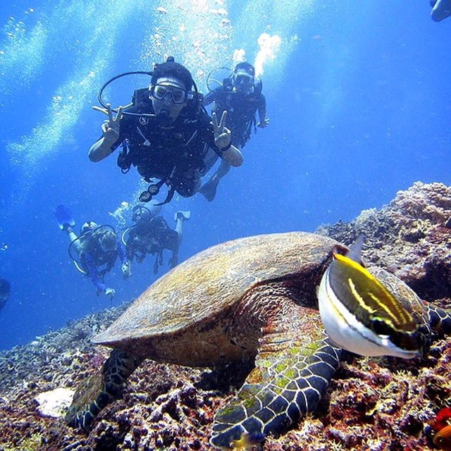 Turtle Point, Gili Meno, Lombok, NTB