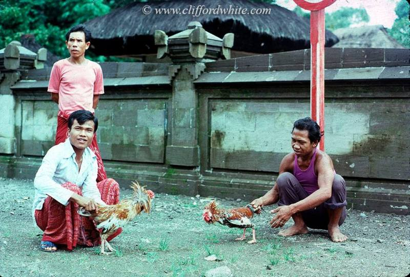 Cockfighting in the streets of Kuta in the 70s