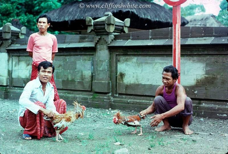 Sabung ayam di jalanan Kuta pada tahun 70an