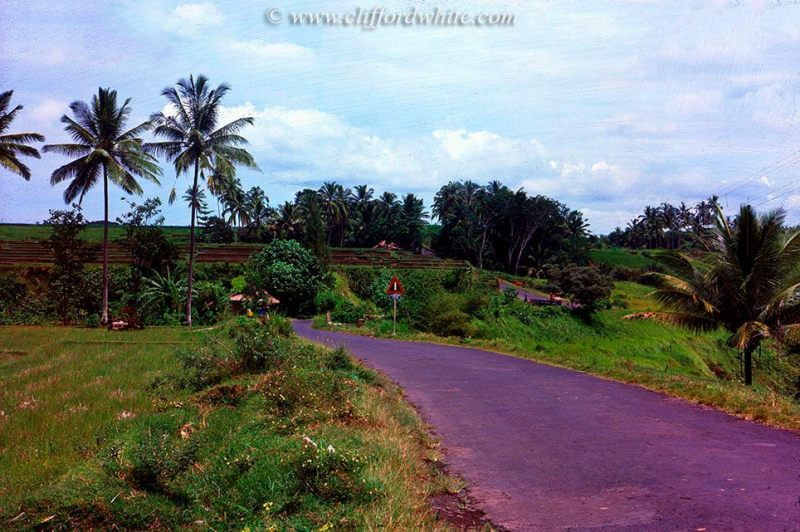 Ubud in the 70s still in the form of rice fields. Now also not much different, Sawah in Ubud can still be found easily