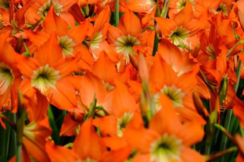 Bunga ini memang unik dan cantik, wajar kalau banyak pengunjung berdatangan kesini