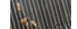 Head Lice on Hair Comb