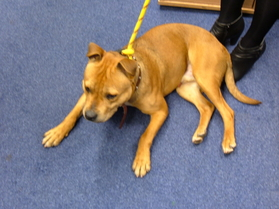 The dog found Curborough Road in Lichfield
