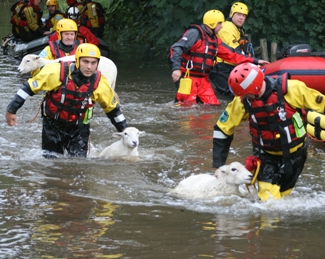 Firefighters rescuing the sheep from flooding in Lichfield