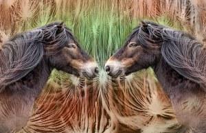 Wild Horses by Robert Ings