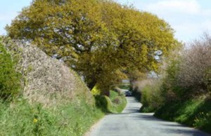 Gravelly Lane in Stonnall. Pic: BrownhillsBob