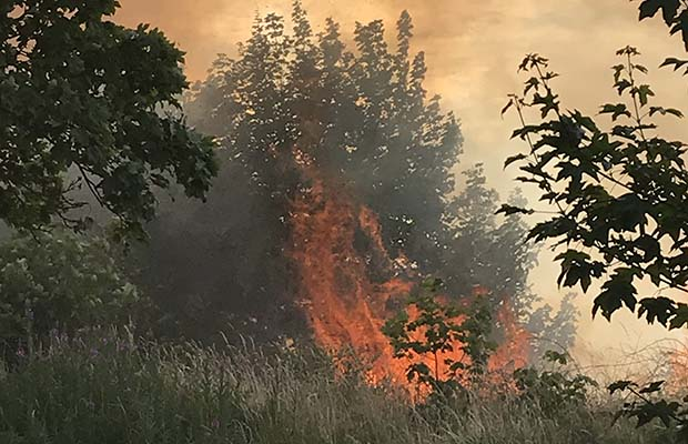 The fire off Sainte Foy Avenue in Lichfield. Pic: Shirley Jenkins