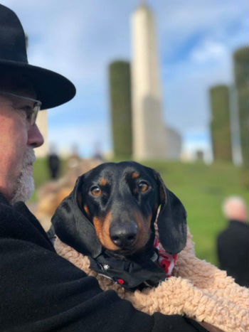 A dog at the National Memorial Arboretum