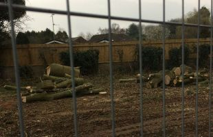 The trees cut down to make way for the Lichfield southern bypass