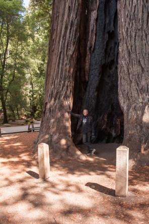 So ein Baum kann schon mal 115 m hoch sein