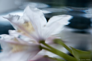 Blüte im Wasser