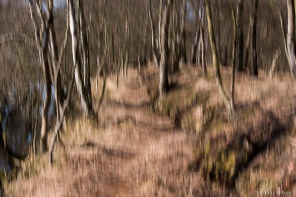 Im Wald. Vertikales Verwischen der Bäume durch das Bewegen der Kamera während der Aufnahme.