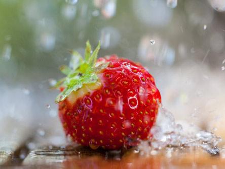 Lichtblick Rostock - Ernährung - frische Erdbeeren