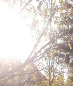 Künstliches Sonnenlicht am Morgen mit der Lichtdusche