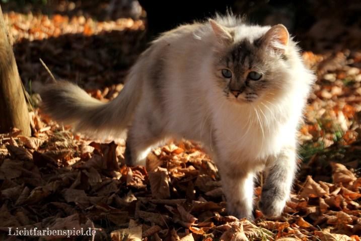 Kathinka im Herbst