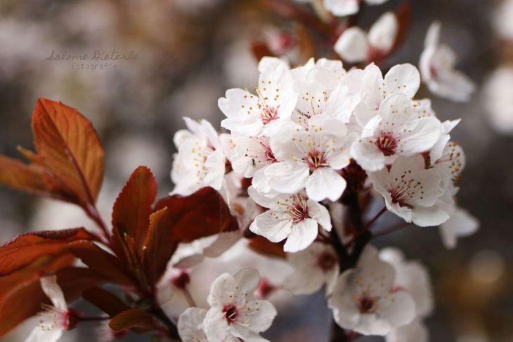 Frühlingsblüte
