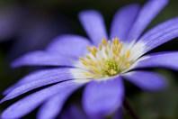 kleine Blume - Christian Cebulla
