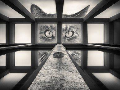 Steffen Mahler - BW Killer Cat