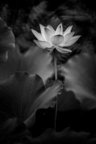 Wolfgang Lin - Stand Alone Lotus BW