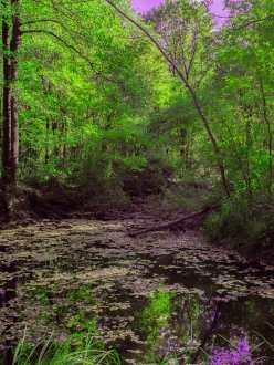 Naturschutzgebiet Bolle di Magadino